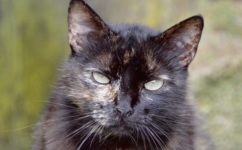 kattie.jpeg